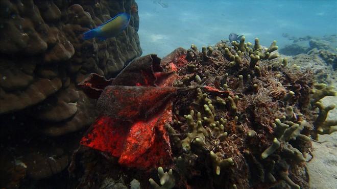 Đáy biển đầy rác thải và cảnh tượng đắng lòng qua ống kính của thợ lặn - ảnh 8