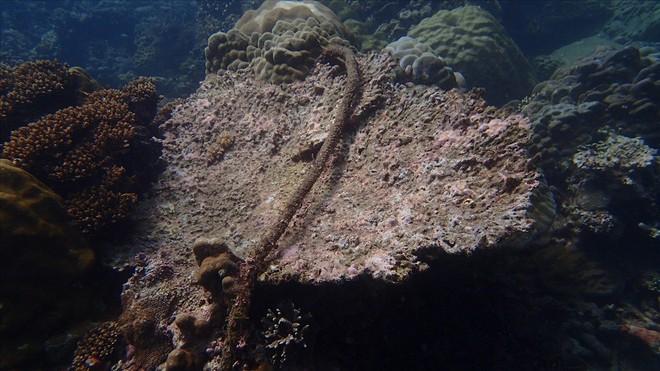 Đáy biển đầy rác thải và cảnh tượng đắng lòng qua ống kính của thợ lặn - ảnh 9