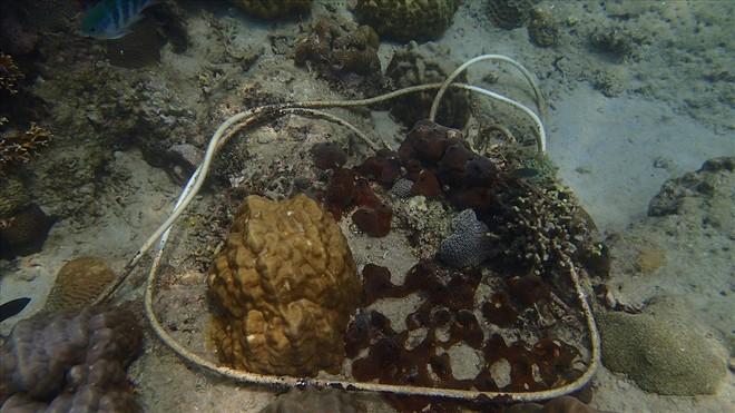 Đáy biển đầy rác thải và cảnh tượng đắng lòng qua ống kính của thợ lặn - ảnh 10