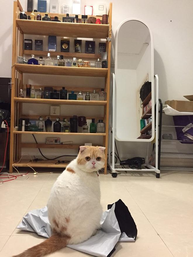 Lộ diện boss mèo - kẻ gián tiếp gây nên scandal gái xinh hỏi mua mèo hot nhất Facebook giữa lúc nước sôi lửa bỏng - ảnh 1