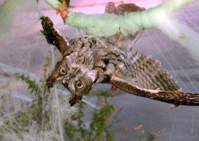 Thói quen dùng mạng nhện giả trang trí mùa Halloween: Siêu rẻ và ma mị, nhưng lại là một thảm họa sinh thái thực sự - ảnh 2