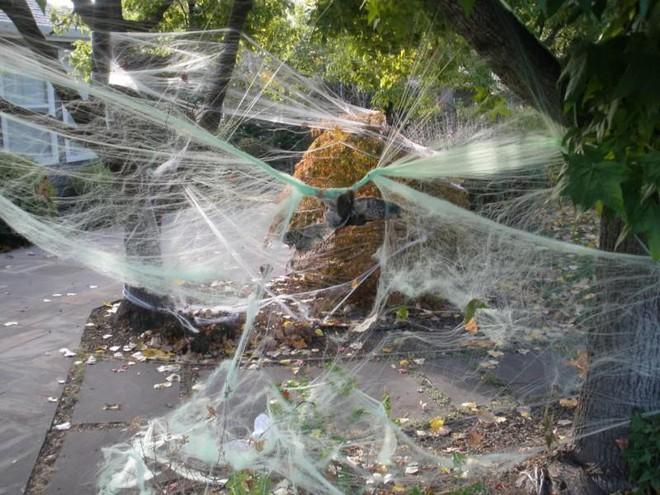 Thói quen dùng mạng nhện giả trang trí mùa Halloween: Siêu rẻ và ma mị, nhưng lại là một thảm họa sinh thái thực sự - ảnh 1