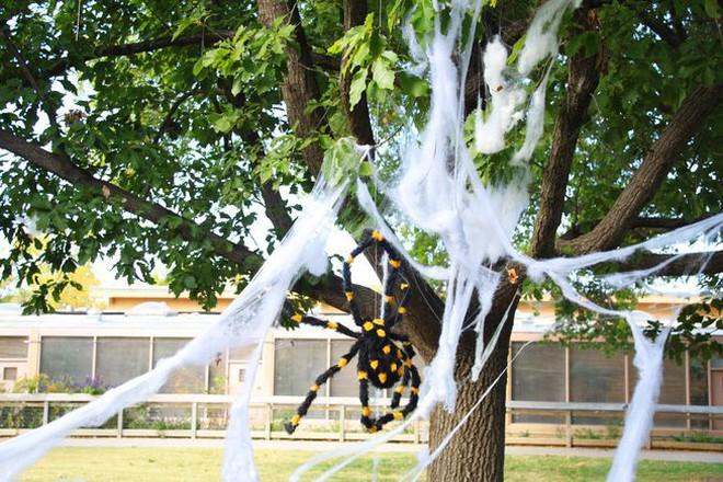 Thói quen dùng mạng nhện giả trang trí mùa Halloween: Siêu rẻ và ma mị, nhưng lại là một thảm họa sinh thái thực sự - ảnh 5