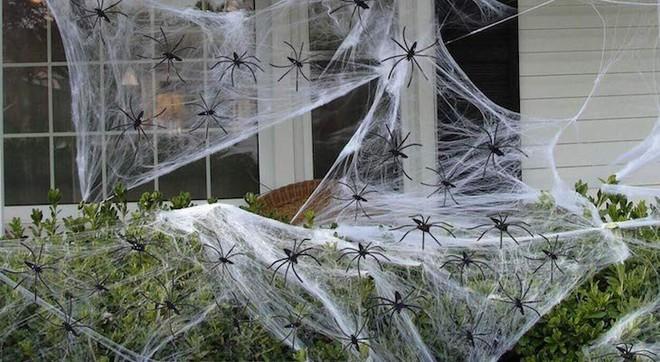 Thói quen dùng mạng nhện giả trang trí mùa Halloween: Siêu rẻ và ma mị, nhưng lại là một thảm họa sinh thái thực sự - ảnh 4