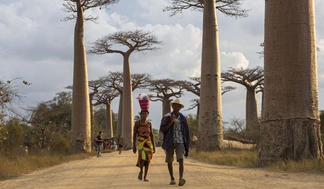 Halloween phiên bản Madagascar: Lễ hội ma kỳ dị bậc nhất thế giới, mang cả... xác chết ra ngoài trời cùng nhau nhảy múa - ảnh 10