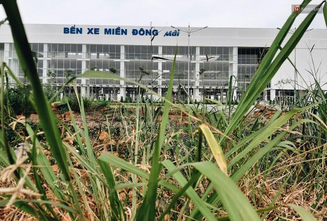 Bến xe Miền Đông mới trị giá 4.000 tỉ đồng đã hoàn thành nhưng vẫn án binh bất động, cỏ dại phủ kín xung quanh - ảnh 2