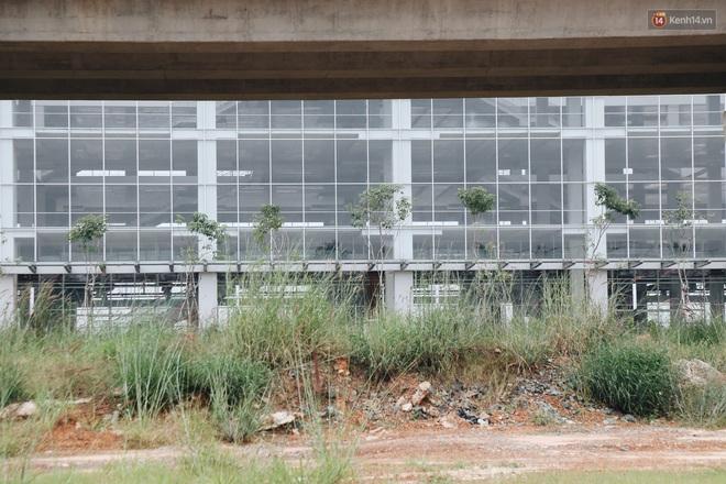 Bến xe Miền Đông mới trị giá 4.000 tỉ đồng đã hoàn thành nhưng vẫn án binh bất động, cỏ dại phủ kín xung quanh - ảnh 6