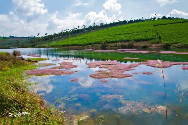 """Dân mạng phát sốt trước hồ Tảo Hồng có thật 100% giữa Việt Nam, lên hình muốn """"ảo tung chảo"""" thì phải nhớ chỉnh màu? - Ảnh 7."""