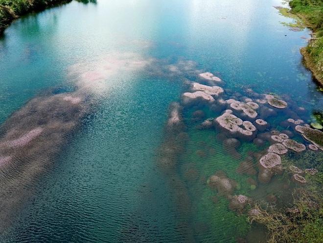 """Dân mạng phát sốt trước hồ Tảo Hồng có thật 100% giữa Việt Nam, lên hình muốn """"ảo tung chảo"""" thì phải nhớ chỉnh màu? - Ảnh 13."""