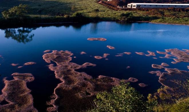 """Dân mạng phát sốt trước hồ Tảo Hồng có thật 100% giữa Việt Nam, lên hình muốn """"ảo tung chảo"""" thì phải nhớ chỉnh màu? - Ảnh 11."""