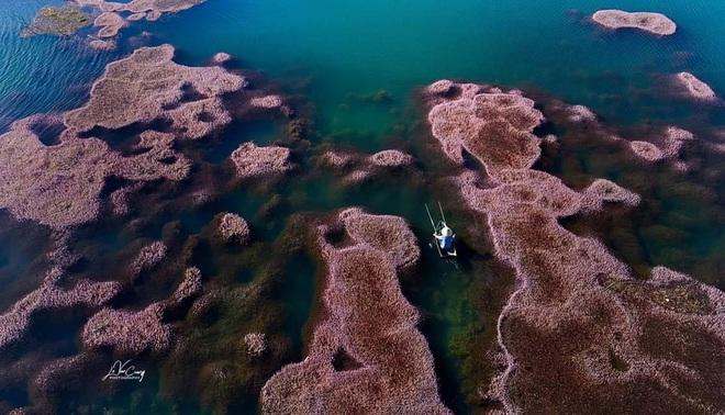 """Dân mạng phát sốt trước hồ Tảo Hồng có thật 100% giữa Việt Nam, lên hình muốn """"ảo tung chảo"""" thì phải nhớ chỉnh màu? - Ảnh 6."""