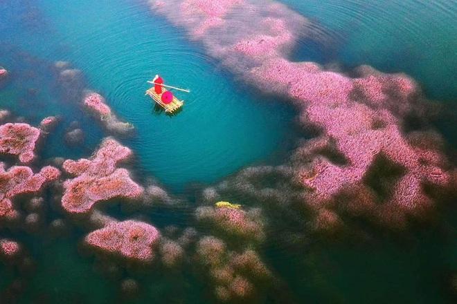 """Dân mạng phát sốt trước hồ Tảo Hồng có thật 100% giữa Việt Nam, lên hình muốn """"ảo tung chảo"""" thì phải nhớ chỉnh màu? - Ảnh 3."""