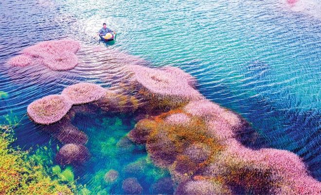 """Dân mạng phát sốt trước hồ Tảo Hồng có thật 100% giữa Việt Nam, lên hình muốn """"ảo tung chảo"""" thì phải nhớ chỉnh màu? - Ảnh 2."""
