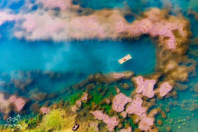 """Dân mạng phát sốt trước hồ Tảo Hồng có thật 100% giữa Việt Nam, lên hình muốn """"ảo tung chảo"""" thì phải nhớ chỉnh màu? - Ảnh 1."""