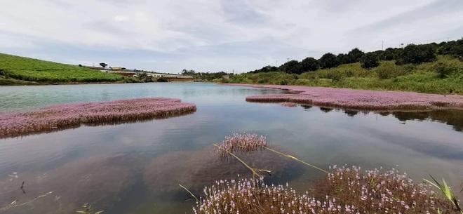 """Dân mạng phát sốt trước hồ Tảo Hồng có thật 100% giữa Việt Nam, lên hình muốn """"ảo tung chảo"""" thì phải nhớ chỉnh màu? - Ảnh 17."""