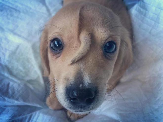 Chú cún con bị dị tật bẩm sinh gây sốt vì chính khiếm khuyết của bản thân - ảnh 2