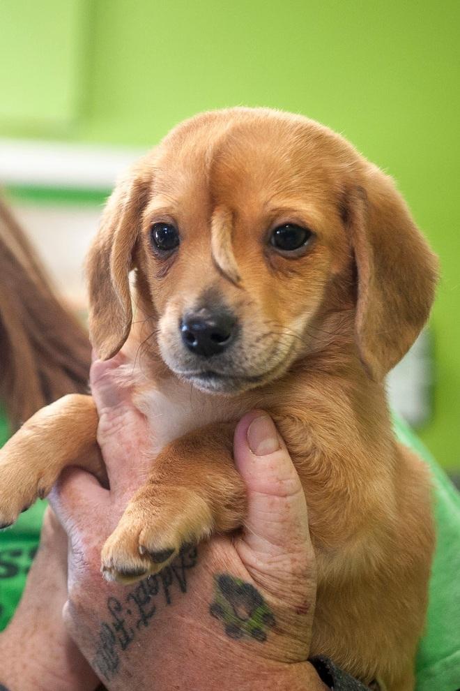Chú cún con bị dị tật bẩm sinh gây sốt vì chính khiếm khuyết của bản thân - ảnh 1