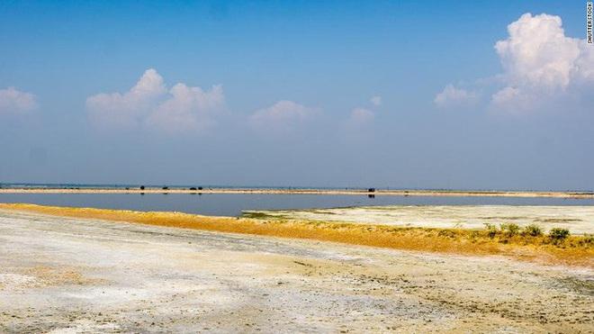 Hơn 2.400 con chim chết bên hồ, phủ kín gần 200 km vuông - ảnh 1