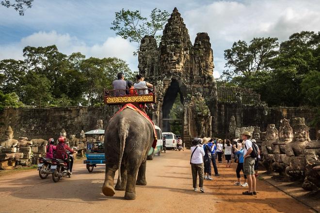 Sau làn sóng phẫn nộ từ dư luận, chính phủ Campuchia chính thức cấm cưỡi voi ở Angkor Wat - Ảnh 3.