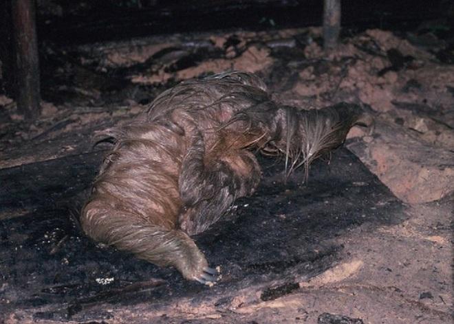 Phát hiện con lười trốn dưới hố xí xây trong rừng Amazon, những gì xảy ra sau đó khiến bất kỳ ai cũng thấy... buồn nôn đến tột độ - ảnh 2