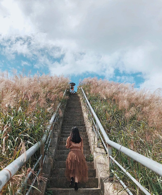 """""""Sống lưng khủng long"""" Bình Liêu đang vào mùa cỏ lau đẹp như một giấc mơ, xem ảnh chỉ biết ôm mộng được đến 1 lần! - Ảnh 21."""