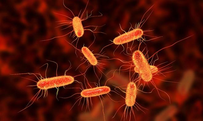 Ăn salad và rau sống, hàng trăm người bị nhiễm khuẩn E. coli - ảnh 2