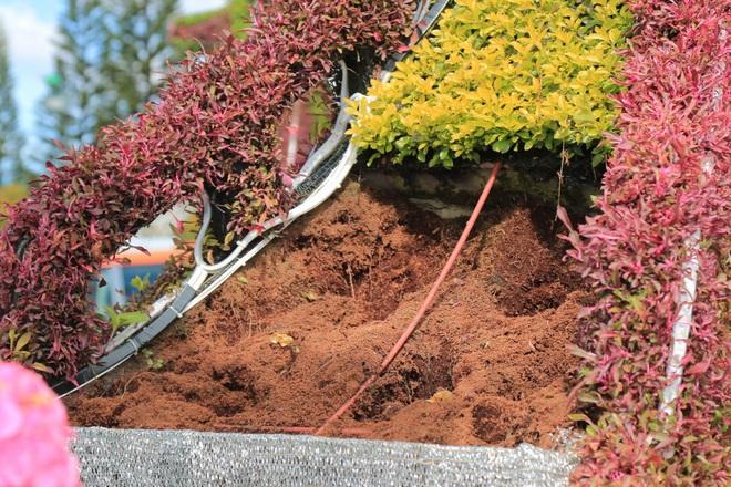 Hàng chục chậu hoa trưng bày ở Festival Hoa Đà Lạt bị kẻ gian bê trộm - Ảnh 2.