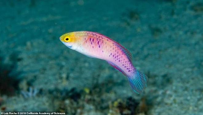 2019 khoa học đã tìm ra những gì: Hơn 70 loài vật mới cùng một con cá được đặt tên theo đất nước giàu có nhất vũ trụ Marvel - Ảnh 1.