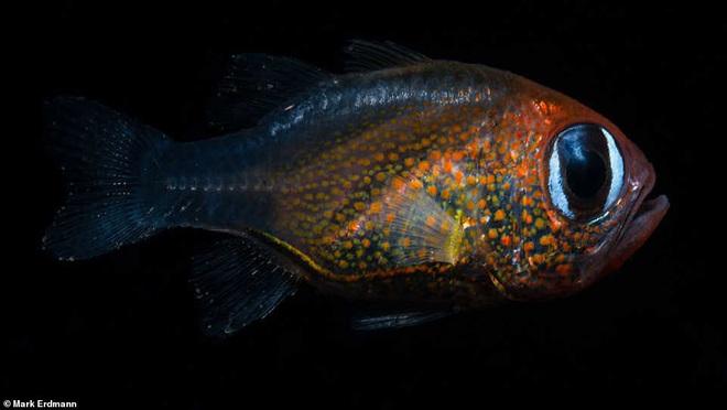 2019 khoa học đã tìm ra những gì: Hơn 70 loài vật mới cùng một con cá được đặt tên theo đất nước giàu có nhất vũ trụ Marvel - Ảnh 5.