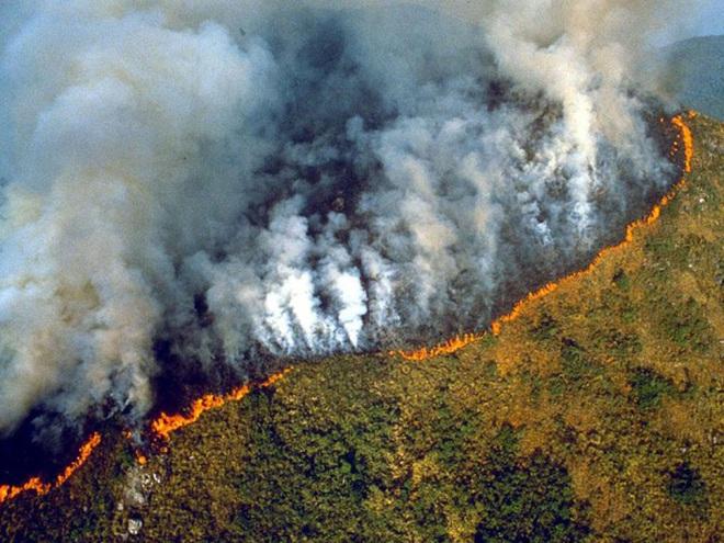 Toàn cảnh Trái đất năm 2019 thực sự rực cháy theo đúng nghĩa đen: Amazon cháy kỷ lục, nhưng đằng sau còn vấn đề hết sức đáng lo ngại - ảnh 2
