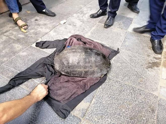 Hà Nội: Người đàn ông bắt được con rùa nặng hơn 10kg dưới hồ Gươm - Ảnh 2.