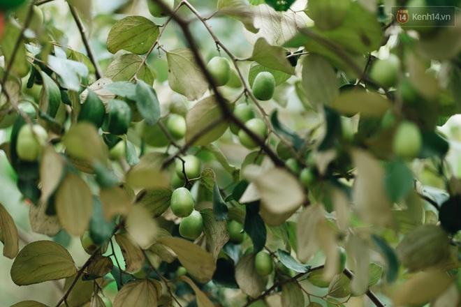 Khám phá vườn táo của trường Đại học rộng nhất Việt Nam, chỉ mất 15k là ăn tẹt ga lại còn được đống ảnh sống ảo - ảnh 9