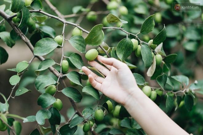 Khám phá vườn táo của trường Đại học rộng nhất Việt Nam, chỉ mất 15k là ăn tẹt ga lại còn được đống ảnh sống ảo - ảnh 4