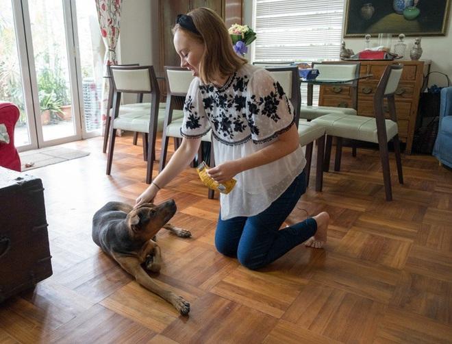 """Vụ đánh bả chó rúng động khu nhà giàu Hong Kong: Những con vật nhỏ bé """"rơi nước mắt màu đen"""" trong tuyệt vọng nhưng thủ phạm mãi là bí ẩn - Ảnh 2."""