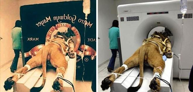 Lật tẩy 12 tấm ảnh giả mạo khiến dân mạng tin sái cổ trong nhiều năm qua - Ảnh 1.