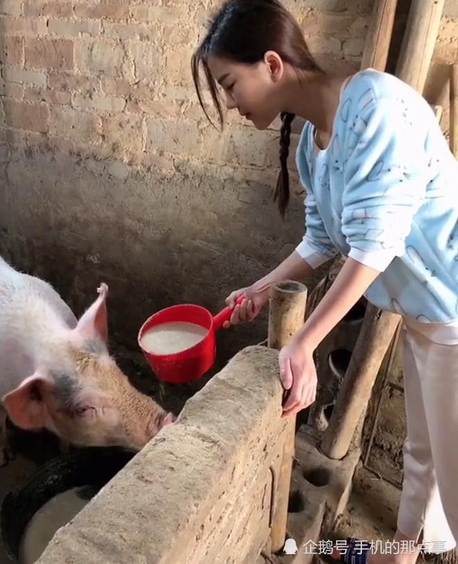 Hotgirl cho lợn ăn dù xinh vẫn bị dân mạng ném đá không thương tiếc vì làm màu - ảnh 5