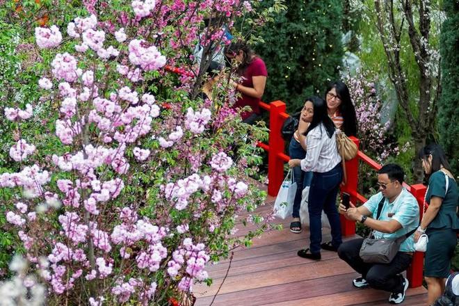 Chiêm ngưỡng hoa anh đào bước vào mùa bung nở đẹp nhất năm - ảnh 8
