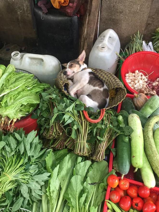 Hình ảnh em cún theo mẹ ra chợ bán rau nhưng ngủ lăn quay được thả tim rần rần vì đáng yêu quá xá - ảnh 2
