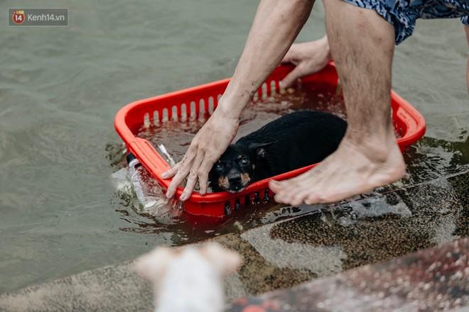 Hà Nội oi nóng ngộp thở, nhiều người mang theo cả thú cưng ra Hồ Tây tắm bất chấp biển cấm - Ảnh 15.
