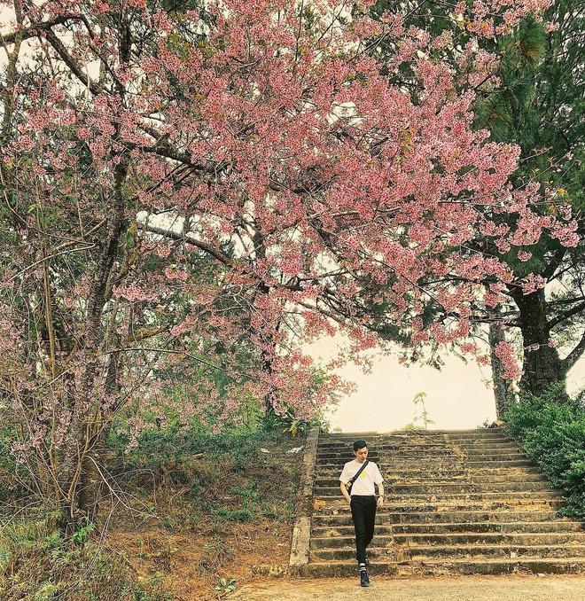 Quên Cao Đẳng Sư Phạm đi, Đà Lạt còn có một ngôi trường sống ảo đẹp chẳng thua Hàn Quốc đây này! - ảnh 40