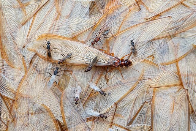 Loạt ảnh thiên nhiên đạt giải thưởng của Viện hàn lâm California: Chứa đựng cuộc sống hoang dã tàn khốc mà cảm động - ảnh 10