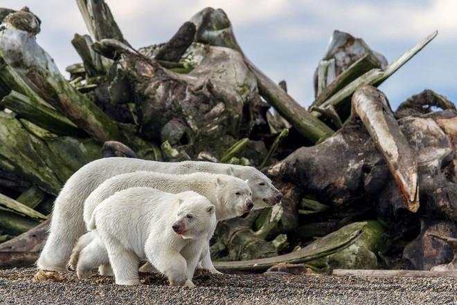 Loạt ảnh thiên nhiên đạt giải thưởng của Viện hàn lâm California: Chứa đựng cuộc sống hoang dã tàn khốc mà cảm động - ảnh 1