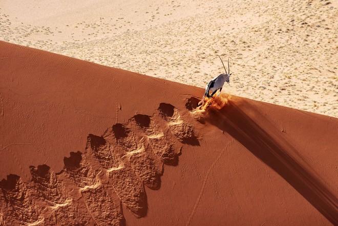 Loạt ảnh thiên nhiên đạt giải thưởng của Viện hàn lâm California: Chứa đựng cuộc sống hoang dã tàn khốc mà cảm động - ảnh 4