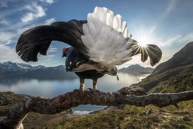 Loạt ảnh thiên nhiên đạt giải thưởng của Viện hàn lâm California: Chứa đựng cuộc sống hoang dã tàn khốc mà cảm động - ảnh 6