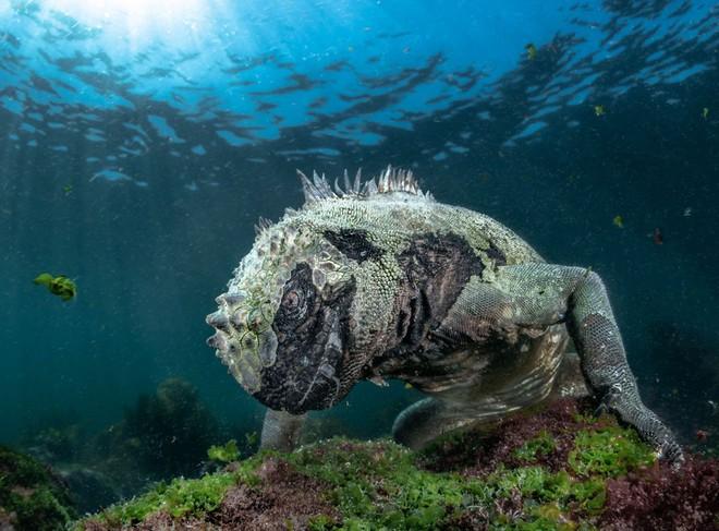 Loạt ảnh thiên nhiên đạt giải thưởng của Viện hàn lâm California: Chứa đựng cuộc sống hoang dã tàn khốc mà cảm động - ảnh 7