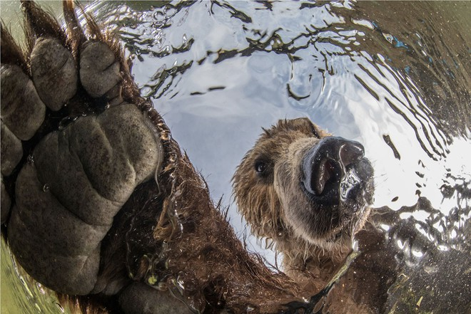 Loạt ảnh thiên nhiên đạt giải thưởng của Viện hàn lâm California: Chứa đựng cuộc sống hoang dã tàn khốc mà cảm động - ảnh 8