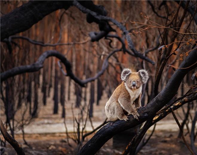 Loạt ảnh thiên nhiên đạt giải thưởng của Viện hàn lâm California: Chứa đựng cuộc sống hoang dã tàn khốc mà cảm động - ảnh 11