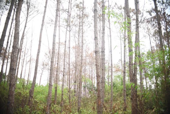 Khởi tố vụ án phá hơn 10 ha rừng thông tại Lâm Đồng - ảnh 4