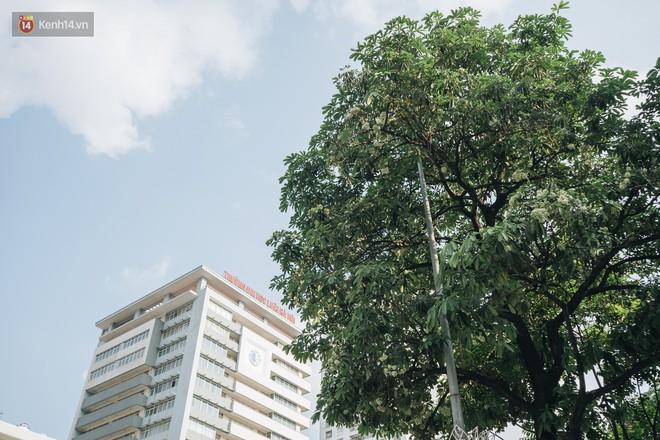 Không chỉ biến hạ thành đông, Hà Nội còn gọi cả hàng cây hoa sữa bung nở khắp phố dù trái mùa - Ảnh 5.
