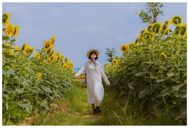 Hốt hoảng trước cảnh tượng hoang tàn của vườn hướng dương hot nhất Sài Gòn: Hoa héo úa, rác ngập tràn khắp nơi! - ảnh 9